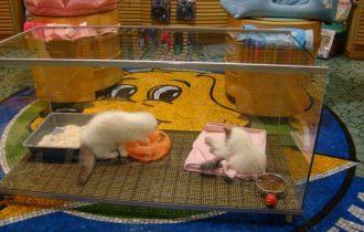Uso pet shop